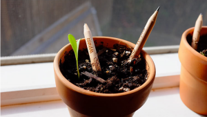 (c) Sprout Pencil, Herb Pack